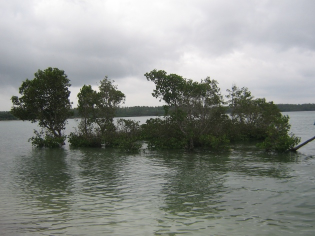 On the west end of the shore is a small mangrove forest.